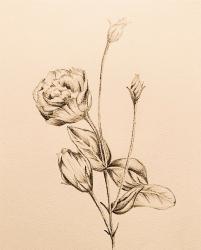 トルコキキョウ           〜奈月と流奈を繋ぐ花〜