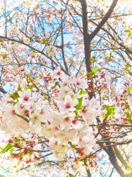 春なんて来なければいいのに、な。