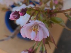 ポエム集2「乱れ舞う桜」