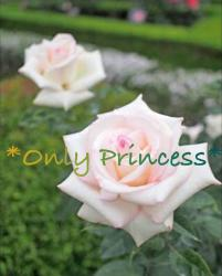*Only Princess*