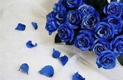 華麗な薔薇